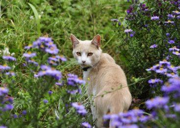 Piccola guida alle piante velenose per gli animali domestici